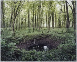 Scars of the WWII in German forests by Henning Rogge